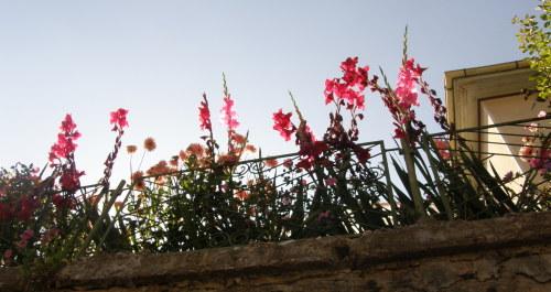 красиви цветя в село Арда