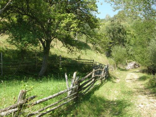 красота - поляни из Родопите