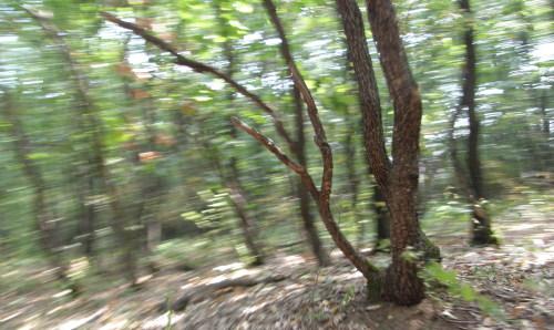 снимка моя от гората край Емен