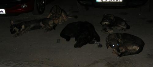 бездомни кучета спят на улицата